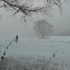 Winter Mist (monkeyiron) Tags: winter snow square scotland perthshire dunkeld birnam