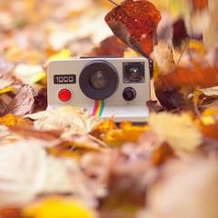 polaroid love (Pamba-) Tags: camera old autumn fall love nature beautiful vintage polaroid leafs