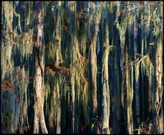 The many moods of Lac Caddo: Haunting (nyc dreamer) Tags: texas bayou swamp spanishmoss cypresstrees caddolake explore116 nikond800 themanymoodsoflaccaddomysterious