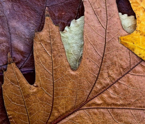 Leaves by SammCox, on Flickr