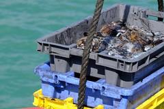 DSCF1467 (Jc Mercier) Tags: pche retourdepche fishermen marins cancale