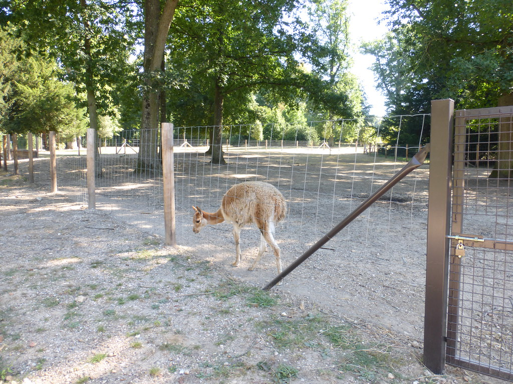 The world 39 s most recently posted photos of vigogne for Zoo yvelines 78
