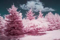 A Touch of Pink...and Blue (Sous l'Oeil de Sylvie) Tags: infrarouge infrared sousloeildesylvie ir g11 canon ciel sky blue bleu rose pink arbres trees parc parcveilleux saintgeorges beauce qubec rve magie irrel mai may 2016
