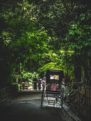 Kyoto,Japan (Photo Alan) Tags: forest street kyoto japan tree streetphotography people outdoor green light