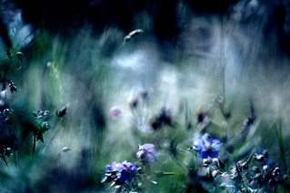 Meadow impressions II