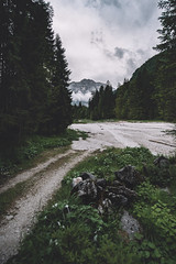i could explore these paths forever (philipp_mitterlehner) Tags: view path fogy alpine alps austria mountains perspective philippmitt adventure outside views forest hiking lookslikefilm landscape wood exploring d810 wilderness nature