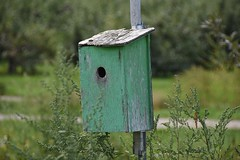 Orchard Birdhouse (Linda Ramsey) Tags: harvest september autumn country house bird orchard birdhouse