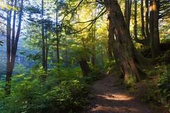 Forest in the Morning (Olympic peninsula, La Push, WA) (Sveta Imnadze.) Tags: morning forest olympicpeninsula secondbeach lapush wa pacificnorthwest light outdoors hiking