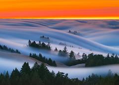"""Fire Waves""-Mt.Tamalpais State Park, CA (Nicholas Steinberg photography) Tags: mttamalpais marincounty millvalley northerncalifornia northbay trees fog sunset sunrise fire bay california californiacoast mist clouds flow"