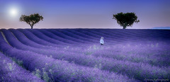 Promenade Senteurs........ (Malain17) Tags: lavender paysage nature champs landscape photography photographers pentax image provence colors sunset sky sillons flickrdepot light panorama travel