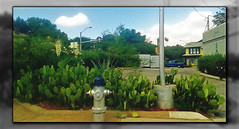 Southern Maid Donuts: Landscape (Photosintheattic (Devy)) Tags: cactus landscape plants house truck flickr firehydrant building sky clouds pole post signallight southernmaiddonuts garden outdoor trees food donuts breakfast dessert sweet