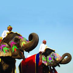 090310 Elephant Festival (BavarIndia) Tags: asia tika