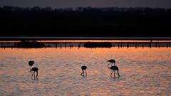 """""""al tramonto 3"""" (Nicola Armari) Tags: salina comaccio ferrara parco delta po"""