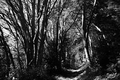 bois 2 (photoRSV) Tags: bw nb forillon gaspesie woods