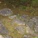 Stone Pavement / 飛石(とびいし)