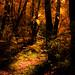 Sunlit Woodland Glade