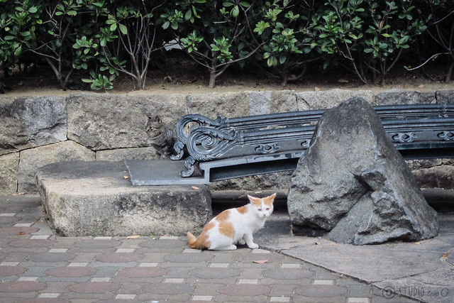 Today's Cat@2012-11-13