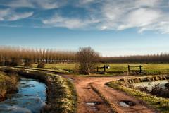 Marais de la Dives (py charbonnier) Tags: winter france hiver rivire normandie paysage marais normandy marcage maraisdeladives