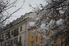 Fluffy (Miss.Sunflower) Tags: city winter snow tree snowfall
