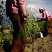 ©FAO/Sailendra Kharel / FAO