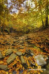 Hayedo Tejera Negra 08 (ignacio izquierdo) Tags: autumn españa forest spain guadalajara bosque otoño negra tejera hayedo