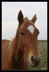 Got some sugar for me ? (photos saintaises) Tags: foal