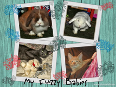 Fuzzies! (Jessi Trouble) Tags: pets cute bunny animals collage cat kitten