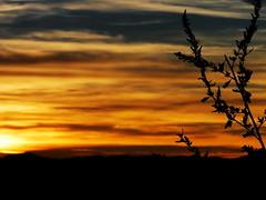 sunset hunting 03
