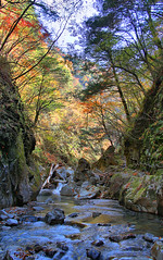 IMG_9813_4_5 (youkaine) Tags: november autumn red orange mountain yellow japan forest river waterfall hiking autumncolors foliage 日本 紅葉 秋 山 yamanashi 11月 川 ハイキング 山梨 nishizawakeikoku 葉っぱ 山梨県