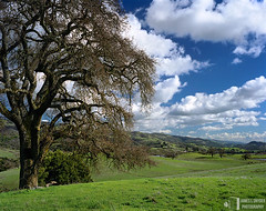 Elegant Oak and Rolling Hills (James L. Snyder) Tags: california ranch park old winter usa brown foothills mountain tree green grass horizontal clouds rural one oak quercus afternoon bright native bare branches country smooth meadow sanjose peaceful sunny bluesky fresh hills glorious pasture bark valley cumulus bayarea trunk vista lone verdant february lush elegant deciduous pastoral grassland majestic puffy solitary bushes graceful idyllic shrubs tranquil rolling hilltop bucolic noble 2007 luxuriant dormant stately sidelighting splendor beckoning outbuildings santaclaracounty countypark diablorange josephgrantcountypark hallsvalley washburntrail treesonhills