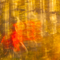Lady in red (Steve-h) Tags: longexposure trees red woman abstract art tourism eos gold design movement europe action tourists handheld birch recreation aerlingus allrightsreserved seeingdouble spotmetering ladyinred aperturepriority 1second striding steveh canonef100400mmf4556lisusm riverdodder canoneos5dmkii canoneos5dmk2 bestcapturesaoi elitegalleryaoi redovercoat galleryoffantasticshots whispydress