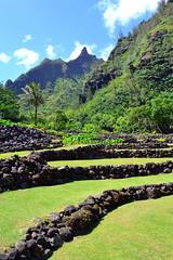 DSC_6318 (heartinhawaii) Tags: vertical hawaii ancient kauai princeville terracing limahuligardens limahuli kauaiinoctober