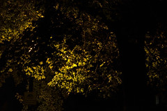 Hidden Light (david.l.goodwin) Tags: trees light columbus shadow ohio abstract black green nature leaves yellow night contrast 50mm darkness nighttimephotography offcampus