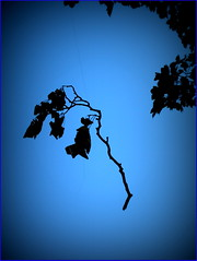 Natures Illusion in Blue II (NickyG8) Tags: trees abstract nature leafs yahoo:yourpictures=yourbestphotoof2012