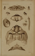 n85_w1150 (BioDivLibrary) Tags: detail animal animals illustration bug insect book details beetle insects bugs page beetles biology larvae arthropods a