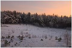 Winter 2012 (1) (H. Bos) Tags: wood trees winter snow bomen frost december sneeuw bos 2012 vorst winterinholland koningwinter hollandserading kingwinter kingfrost
