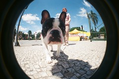 #343 ([ iany trisuzzi ]) Tags: dog film animal analog 35mm lomography toycamera fisheye fisheye2 project365 365days