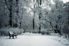 Rime ice (ewitsoe) Tags: park trees winter sun mist 35mm frozen woods nikon frost path poznan polan d80