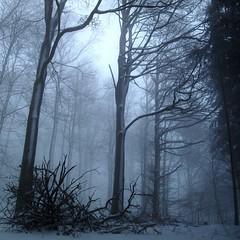 BlueCold (Lothbrok'sYen) Tags: winter trees silhouettes blue snow schnee januar january forest wald naturesfinest abigfave supershot anawesomeshot