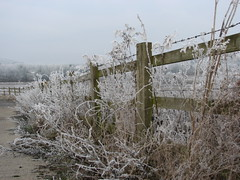 Happy Fence Friday (stepheneverettuk) Tags: uk england southwest canon hoarfrost wiltshire pathway hff warminster s3is steveeverett happyfencefriday scrubplants