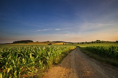 Dirt road and fields of corn (tomaskriz1) Tags: road dirt corn moravian trees tree sunset sunlight summer spring sky season scenic scenery rural plant outdoor nature landscape land idyllic horizon green grass forest field farm evening environment day countryside country cloudy clouds cloud beauty beautiful background agriculture