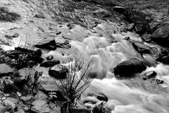 Coorg (arjun.balan) Tags: coorg stream bw longexposure abbey falls nature madikeri slowshutter