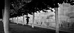 Canopy (Greg Adams Photography) Tags: brussels europe colorblind blackandwhite umbrella man silhouette wall trees rain weather walking trunks white repetition hhsc2000 summer 2016