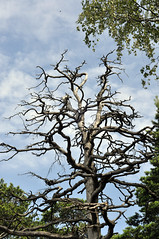 Ode to a Dead Tree: A Modern Poem (JohntheFinn) Tags: kaitalahti helsinki finland suomi eurooppa europe nature tree luonto puu poetry poem poet runo runous runoilija klaggy