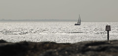 Sailing Silhouette (DaveStrong) Tags: 5d 5dmarkii 5dii 5d2 5dmark2 uk united kingdom summer canon hayling island portsmouth south sun coast sea sail sailing silhouette beautiful reflection water