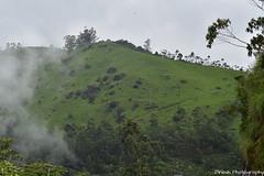 Slowly Mist Closing into The Mountain Valleys, Munnar - Breath Taking Spots (Dinesh flicks) Tags: munnar munnarphotos munnarscenaries munnartouristspot devikulam topstation amaravathidam chinnarwildlifesanctuary thekkady dinesh photography kerala mist