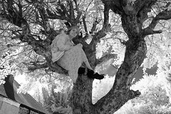 Up a Tree (Apionid) Tags: appletree upatree selfportrait nikond40 ir infrared 720nm 366the2016edition 3662016 day239366 26aug16 lettherightonein