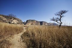 (sara_babusci) Tags: madagascar park parco centrale isalo central landscape paesaggio natura nature sarababusci babusci albero pianta path sentiero