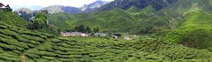 Tea plantation in the Cameron Highlands, Malaysia (Frans.Sellies) Tags: tea malaysia plantation teaplantation cameronhighlands img2947stitchorthogr