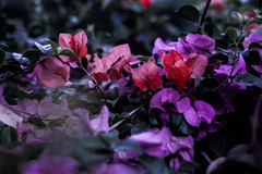 Botanical Series19 (Elena Picart) Tags: elenapavlova floralartprint interiors modern minimal flowerphotographs floralart botanicalprint flowerphotography garden spring decor naturedecor blossoms picargallery
